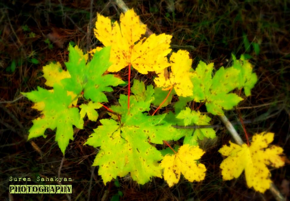 Autumn Leaves in Margahovit, Armenia - A Photo By Suren Sahakyan