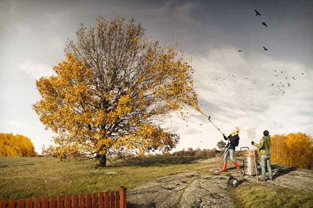 last-fall-640x426