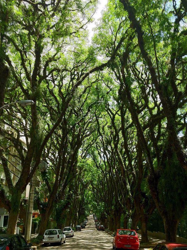 12628160-R3L8T8D-700-beautiful-streets-trellis-canopies-3-21
