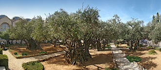 330px-Jerusalem_Gethsemane_tango7174
