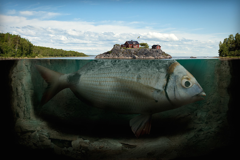 impossible-photo-manipulation-image-editing-fish