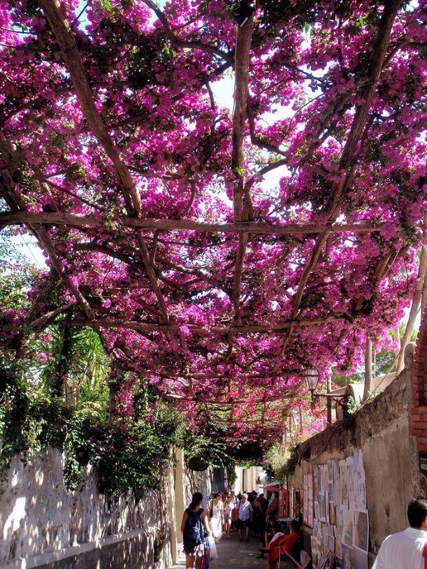 12629260-R3L8T8D-700-beautiful-streets-trellis-canopies-9__700