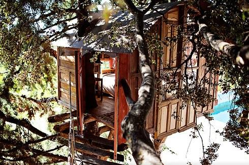 Միկրոտնակ  ծառի ճյուղերում