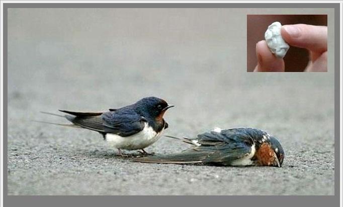 թռչուններ
